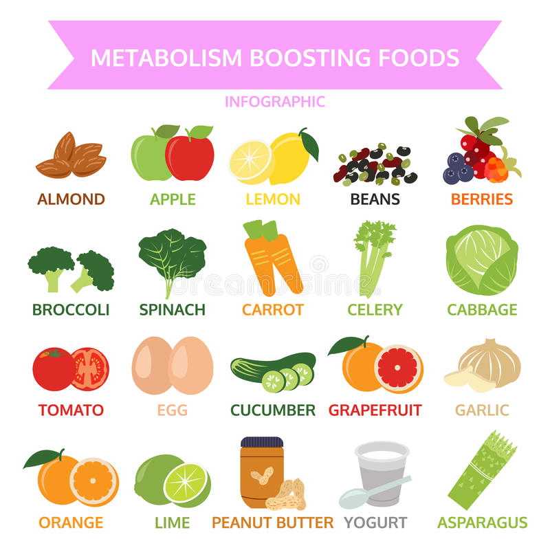 Αρχίζοντας τρόφιμα μεταβολισμού, γραφικά τρόφιμα πληροφοριών, λαχανικό, φρούτα διανυσματική απεικόνιση