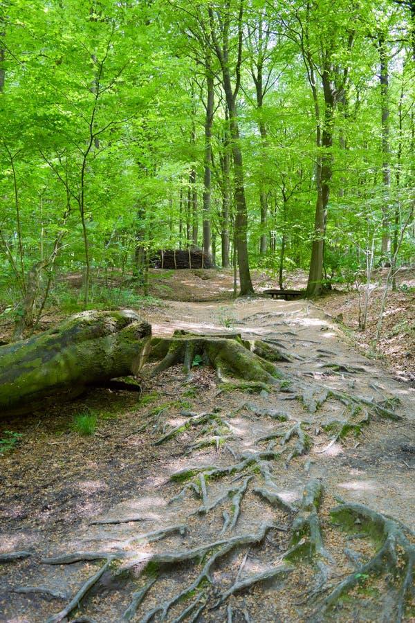 Αρχίστε το δάσος φθινοπώρου στοκ φωτογραφίες