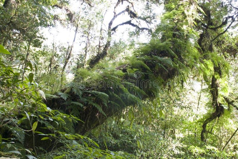 Αρχαία κάλυψη δέντρων με το βρύο και τη φτέρη στοκ εικόνες