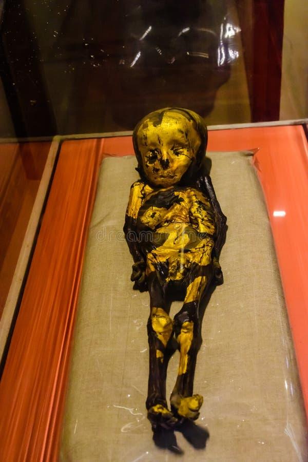 Αρχαία μούμια του παιδιού στο μουσείο των αιγυπτιακών αρχαιοτήτων γνωστών συνήθως ως αιγυπτιακό μουσείο ή το μουσείο του Καίρου στοκ φωτογραφίες