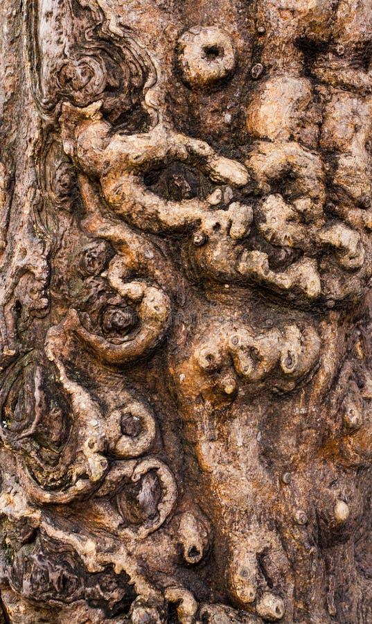 Αρχαία σύσταση φλοιών στοκ φωτογραφία με δικαίωμα ελεύθερης χρήσης