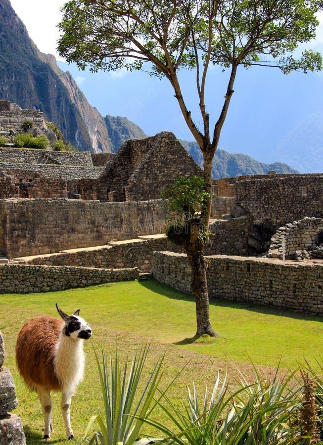 αρχαίες llama καταστροφές στοκ εικόνες με δικαίωμα ελεύθερης χρήσης
