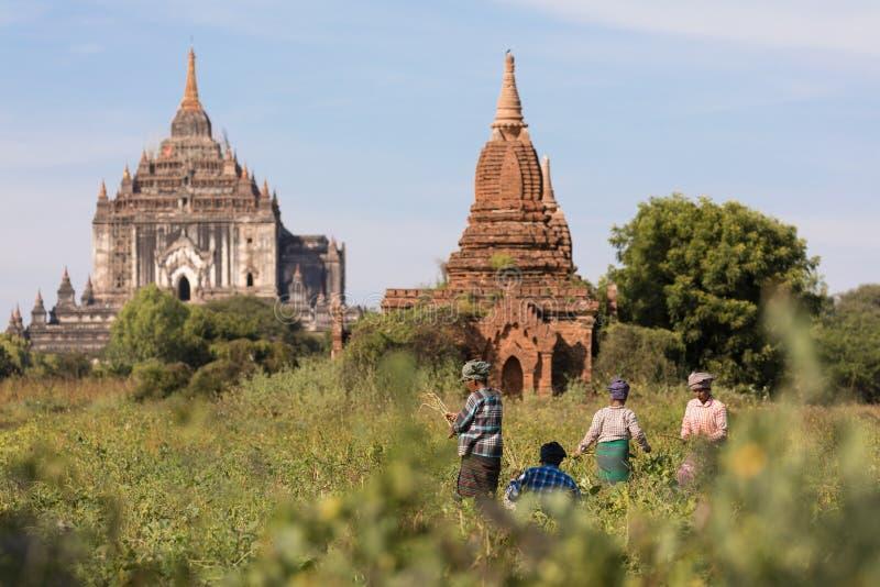 Αρχαίοι ναοί του Βούδα σε Bagan, το Μιανμάρ (Βιρμανία στοκ φωτογραφία