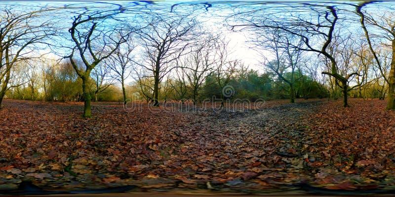 Αρχαίο δάσος στη Beverley στοκ εικόνες με δικαίωμα ελεύθερης χρήσης