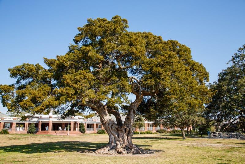 Αρχαίο ζωντανό δρύινο δέντρο στο πάρκο στοκ φωτογραφία με δικαίωμα ελεύθερης χρήσης
