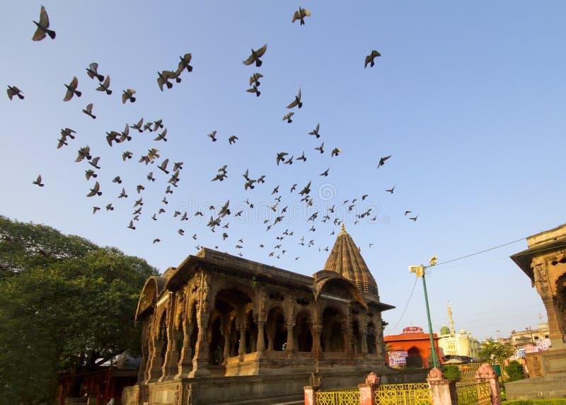 Αρχαίο ινδικό παλάτι με το πέταγμα πουλιών στοκ εικόνες