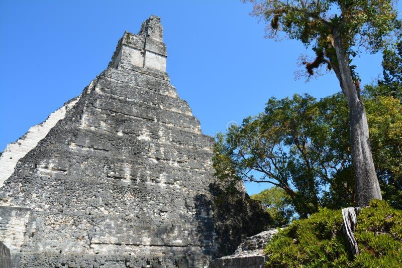 Αρχαιολογική περιοχή Tikal στη Γουατεμάλα στοκ εικόνα με δικαίωμα ελεύθερης χρήσης