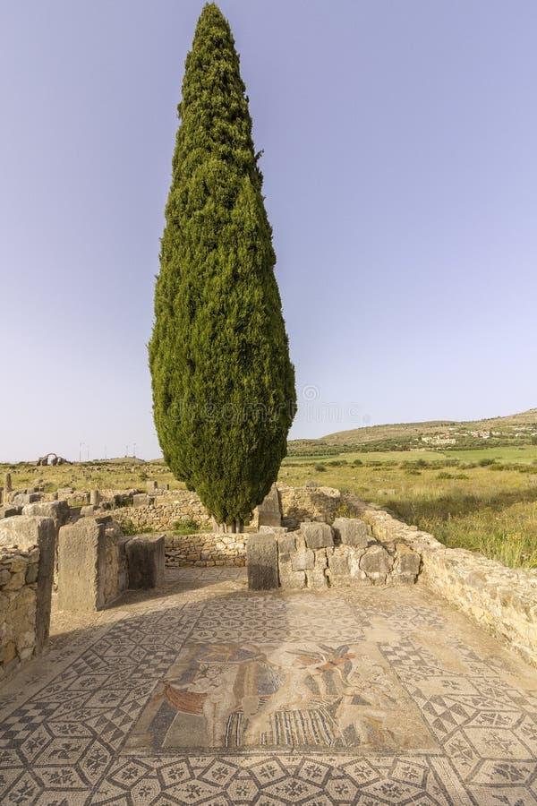 Αρχαιολογική περιοχή Volubilis, αρχαία ρωμαϊκή πόλη αυτοκρατοριών, Μαρόκο στοκ εικόνα με δικαίωμα ελεύθερης χρήσης