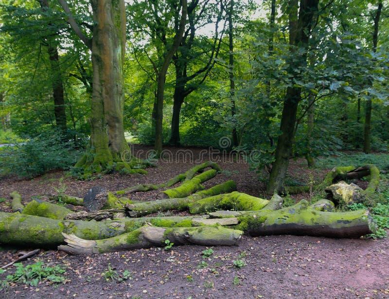 Αρχεία καταγραφής δέντρου στοκ φωτογραφία με δικαίωμα ελεύθερης χρήσης