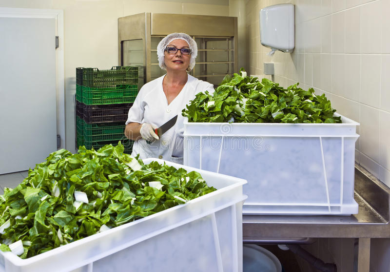Αρχιμάγειρας με το φυλλώδες λαχανικό περικοπών στην κουζίνα νοσοκομείων στοκ φωτογραφίες με δικαίωμα ελεύθερης χρήσης
