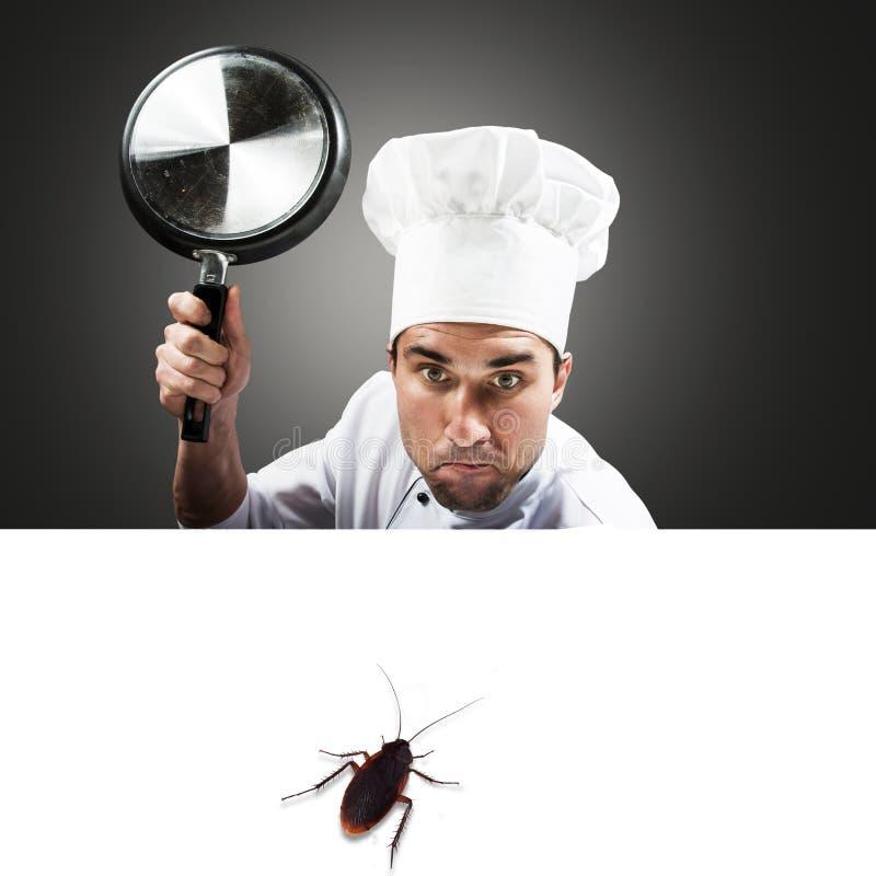 Αρχιμάγειρας που επιτίθεται σε μια κατσαρίδα στοκ εικόνες με δικαίωμα ελεύθερης χρήσης