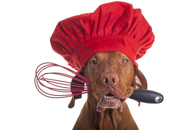 Αρχιμάγειρας σκυλιών με beater αυγών στοκ φωτογραφίες με δικαίωμα ελεύθερης χρήσης