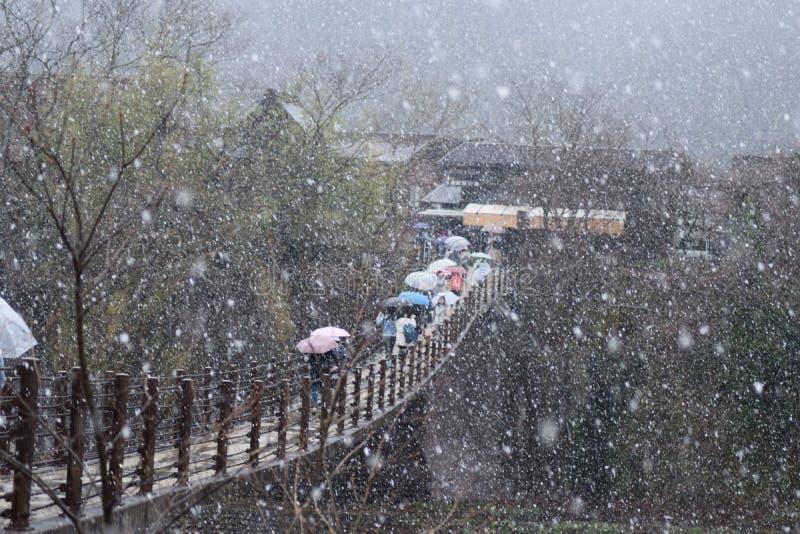Αρχιτεκτονική Ιαπωνία γεφυρών σπιτιών βουνών Shirakawago δέντρων ανθών κερασιών ανοίξεων χιονιού στοκ φωτογραφία