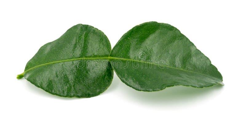 Ασβέστης Kaffir με τα φύλλα στο άσπρο υπόβαθρο στοκ εικόνες