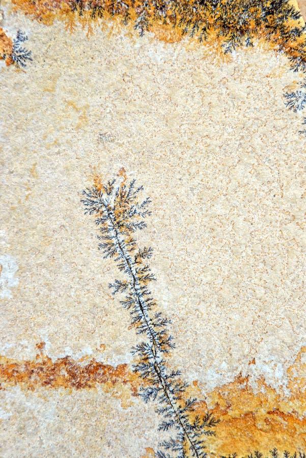 Ασβεστόλιθος με τους δενδρίτες μαγγάνιου στοκ φωτογραφίες