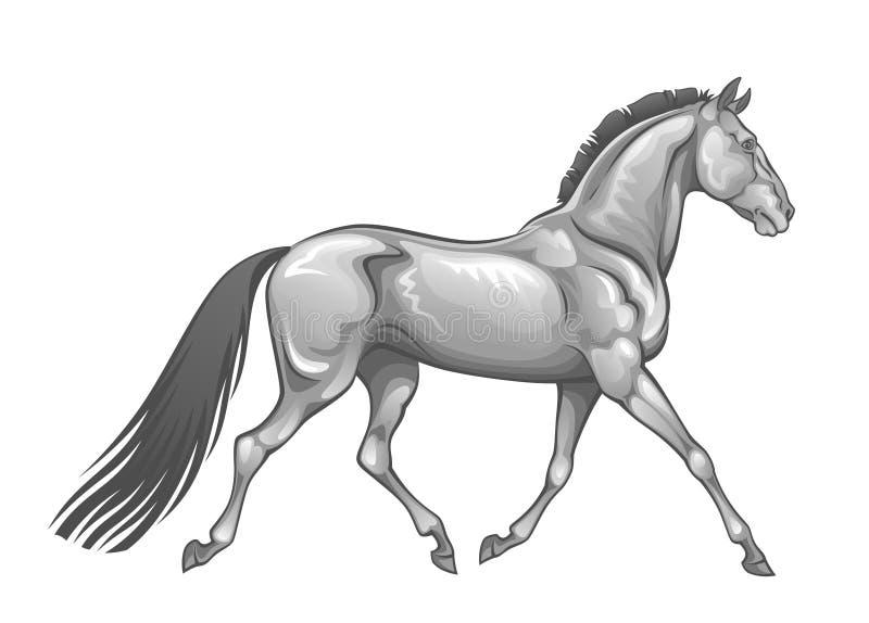 Ασημένιο άλογο ελεύθερη απεικόνιση δικαιώματος