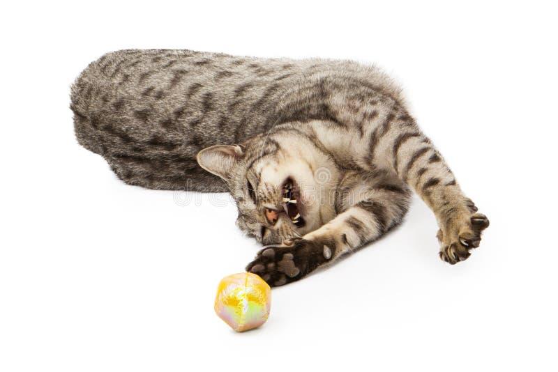 Ασημένιο παιχνίδι Ocicat στοκ εικόνα με δικαίωμα ελεύθερης χρήσης