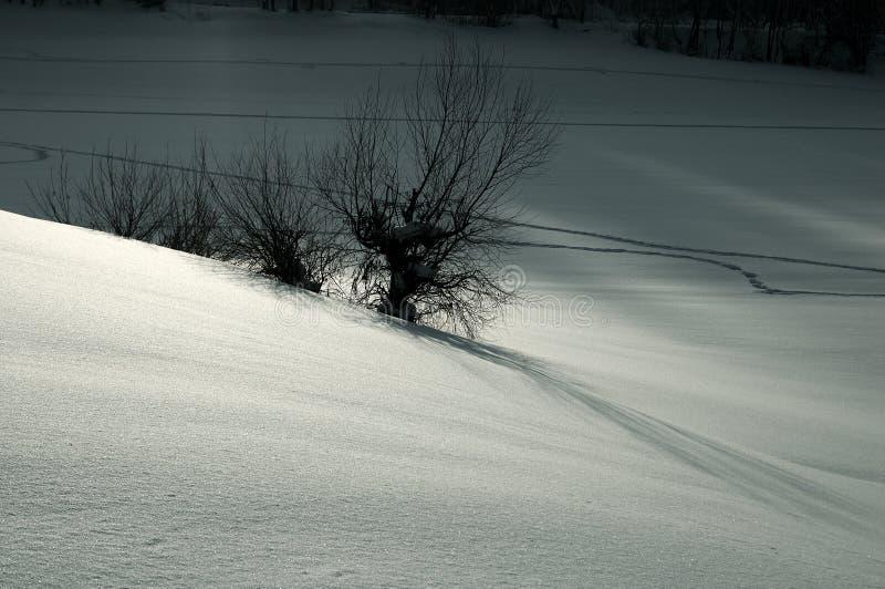 ασημένιο χιόνι τοπίων Στοκ φωτογραφίες με δικαίωμα ελεύθερης χρήσης
