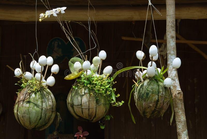 Ασιάτης που κρεμά houseplants στοκ φωτογραφίες