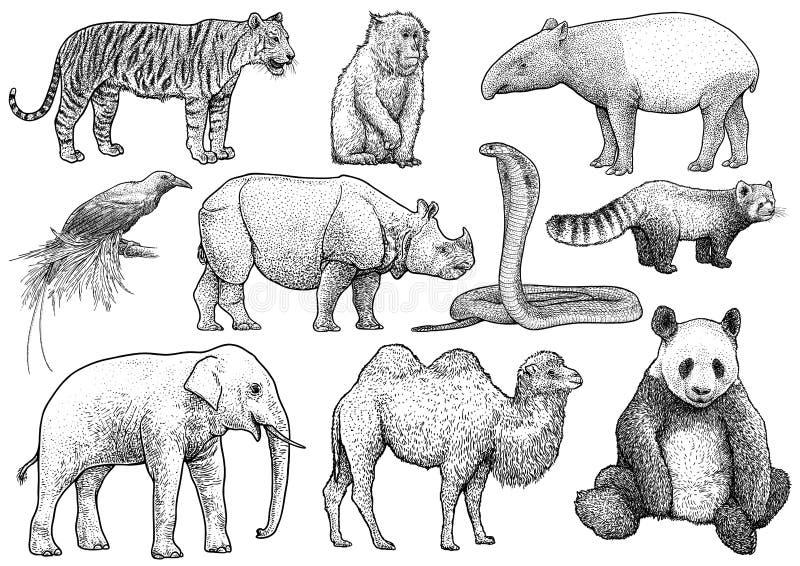 Ασιατική απεικόνιση συλλογής ζώων, σχέδιο, χάραξη, μελάνι, τέχνη γραμμών, διάνυσμα διανυσματική απεικόνιση