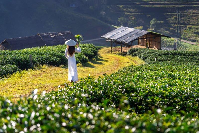 Ασιατική γυναίκα που φορά τον πολιτισμό του Βιετνάμ παραδοσιακό στον πράσινο τομέα τσαγιού στοκ εικόνες