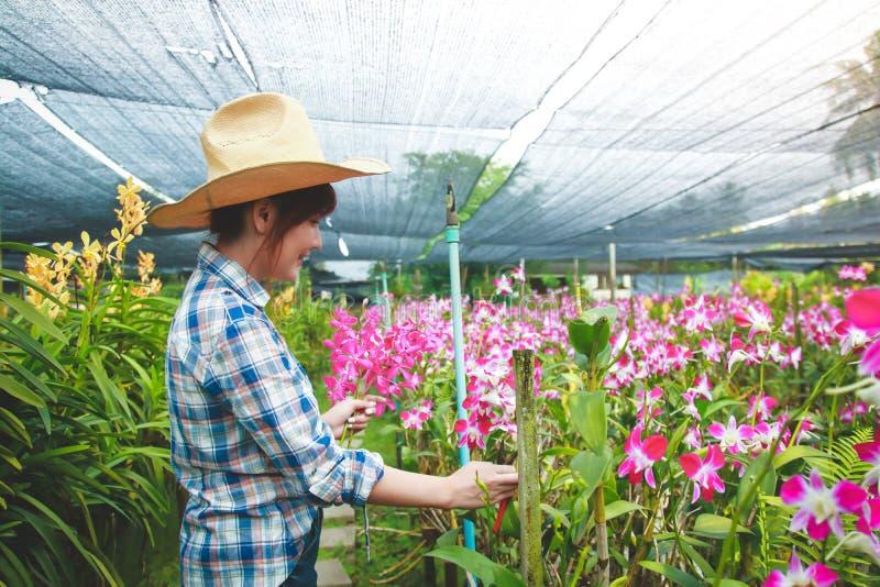 Ασιατικοί αγρότες που κάνουν τα αγροκτήματα ορχιδεών στοκ εικόνες