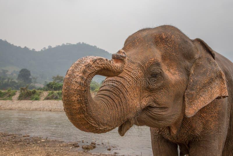 Ασιατικός ελέφαντας από τον ποταμό στην Ταϊλάνδη στοκ φωτογραφία με δικαίωμα ελεύθερης χρήσης