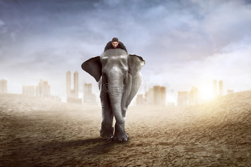 Ασιατικός ελέφαντας οδήγησης επιχειρησιακών ατόμων στοκ εικόνες