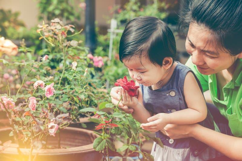 Ασιατικός θαυμασμός μητέρων και κορών για τα ροδαλά λουλούδια με το sunligh στοκ φωτογραφία με δικαίωμα ελεύθερης χρήσης