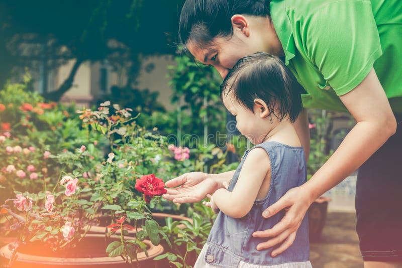 Ασιατικός θαυμασμός μητέρων και κορών για τα ροδαλά λουλούδια με το sunligh στοκ εικόνα με δικαίωμα ελεύθερης χρήσης