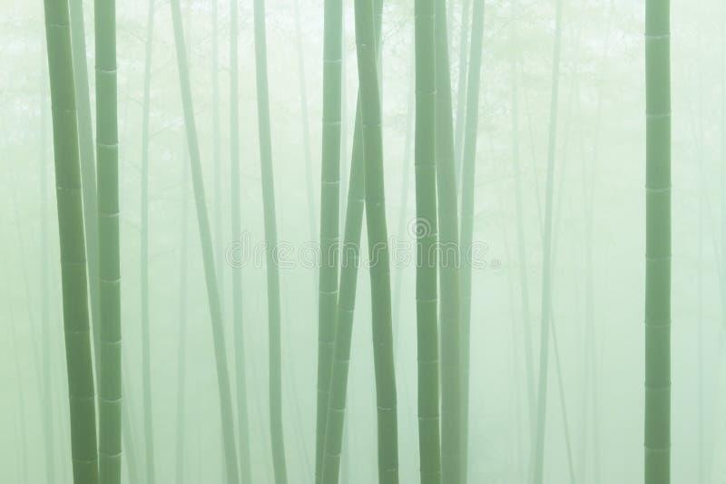 ασιατικός μπαμπού καιρός πρωινού ομίχλης δασικός στοκ εικόνα με δικαίωμα ελεύθερης χρήσης