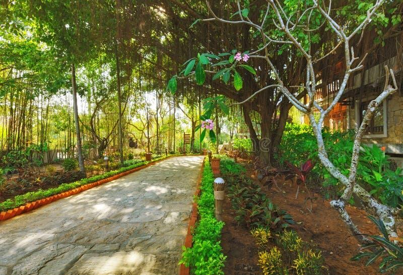 Ασιατικός τροπικός κήπος στοκ εικόνες