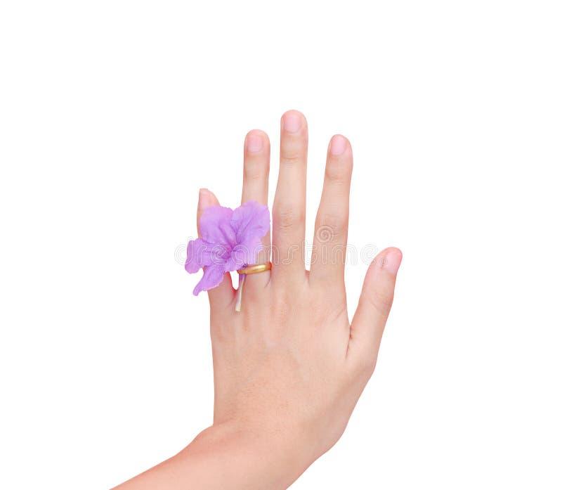 Ασιατικό αριστερό φορώντας χρυσό δαχτυλίδι γυναικών με την ενιαία ζωηρόχρωμη πορφυρή άνθιση που απομονώνεται στο άσπρο υπόβαθρο μ στοκ φωτογραφίες με δικαίωμα ελεύθερης χρήσης