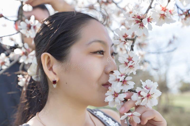 Ασιατικό sniffs κοριτσιών λουλούδι του ανθίζοντας αμυγδάλου στοκ φωτογραφία με δικαίωμα ελεύθερης χρήσης