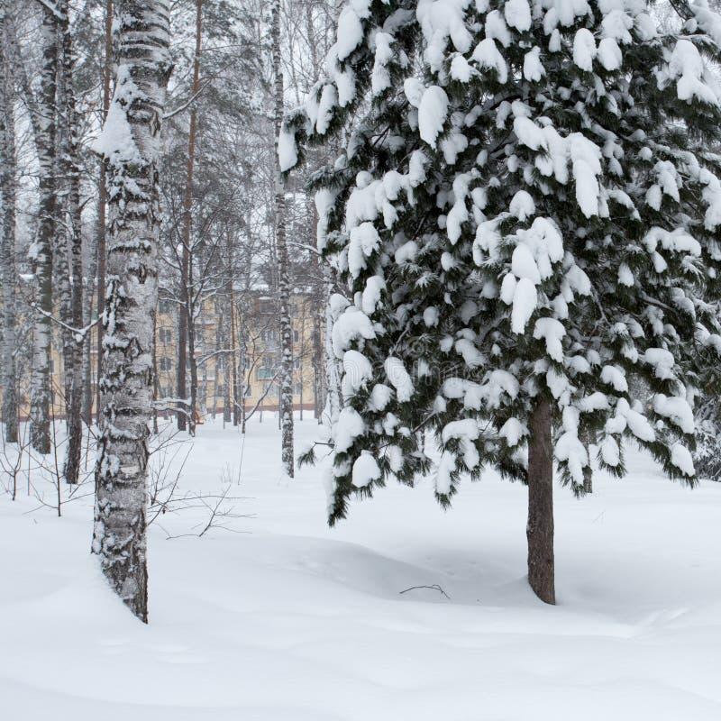 δασικός μαγικός χειμώνας στοκ εικόνα