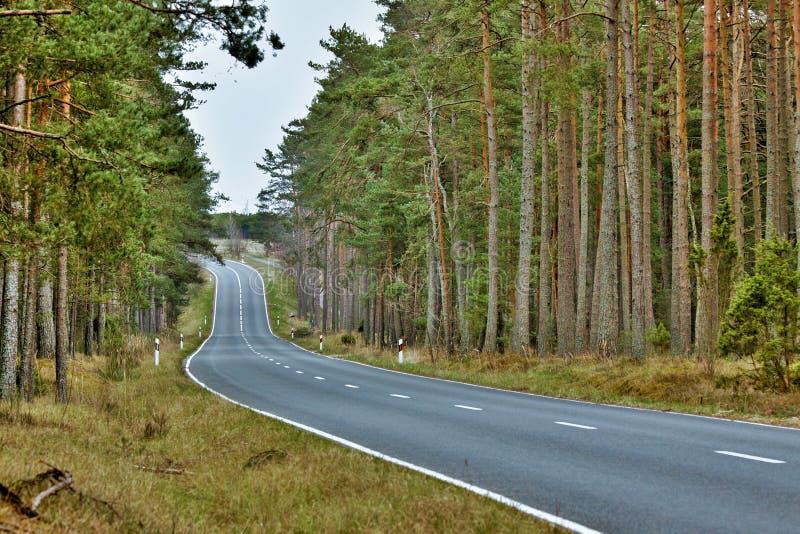 δασικός δρόμος φυσικός στοκ φωτογραφία με δικαίωμα ελεύθερης χρήσης