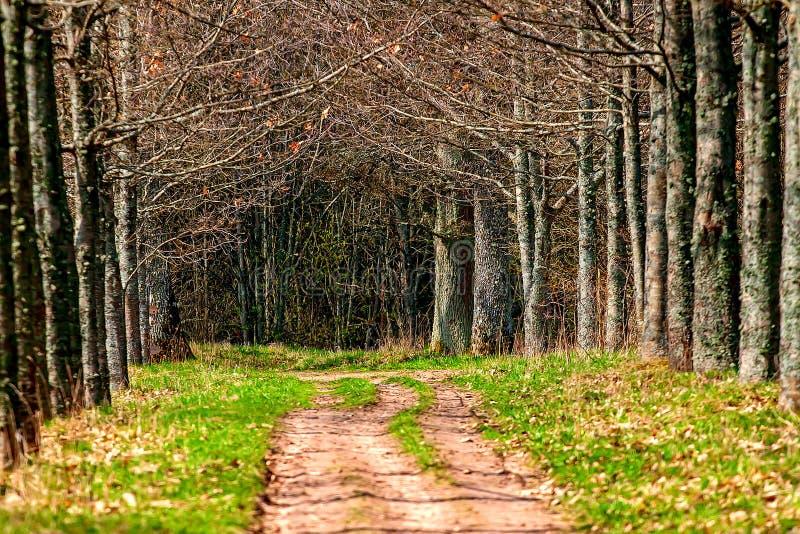 δασικός koh mak δρόμος στοκ εικόνα με δικαίωμα ελεύθερης χρήσης