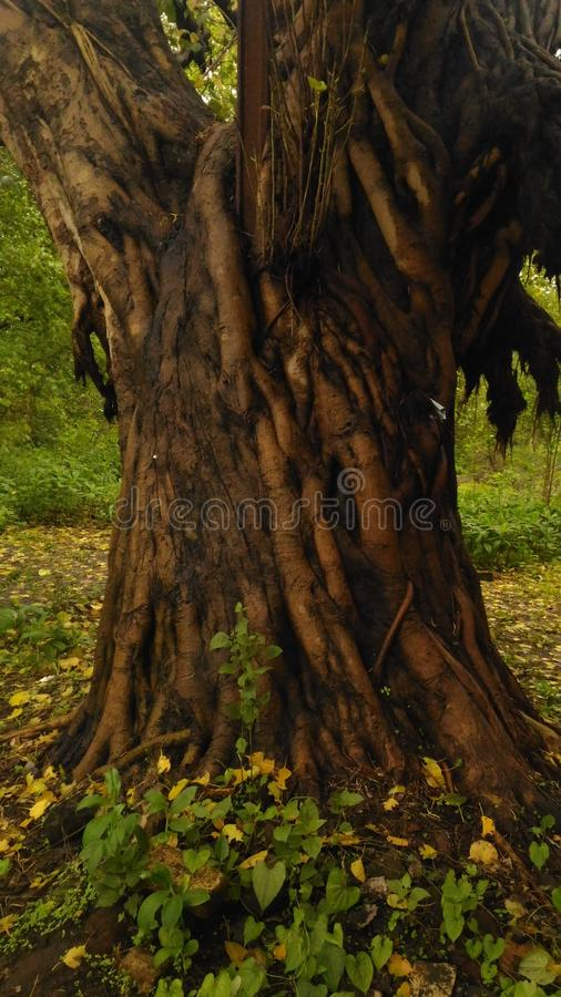 δασικό δέντρο διαβάσεων φύσης στοκ φωτογραφία