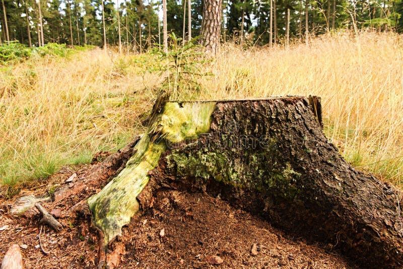 δασικό δέντρο κολοβωμάτων μανιταριών πρασινάδων στοκ φωτογραφία με δικαίωμα ελεύθερης χρήσης