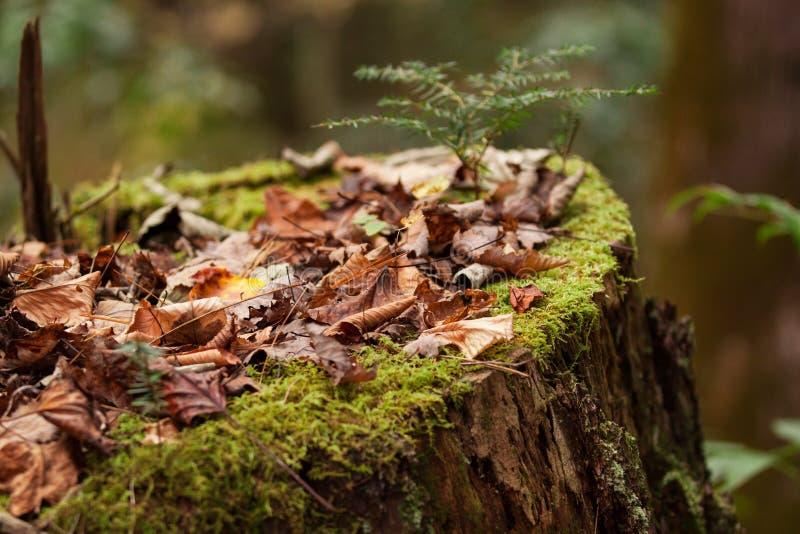 δασικό δέντρο κολοβωμάτων μανιταριών πρασινάδων στοκ εικόνες