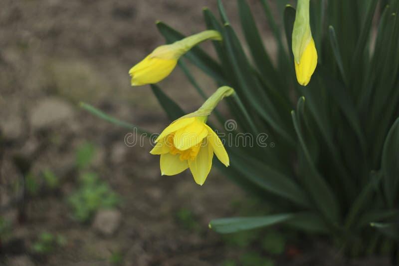 δασικό λευκό άνοιξη λουλουδιών στοκ φωτογραφία