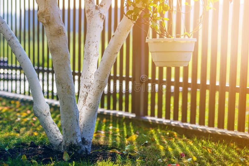 Ασπρισμένος φλοιός της ανάπτυξης δέντρων στον ηλιόλουστο κήπο οπωρώνων στο θολωμένο πράσινο διαστημικό υπόβαθρο αντιγράφων στοκ εικόνες με δικαίωμα ελεύθερης χρήσης