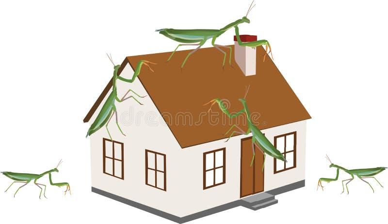 Ασπόνδυλο έντομο μαντίδα, θρησκευτική νόσος πάνω από την κατοικία διανυσματική απεικόνιση