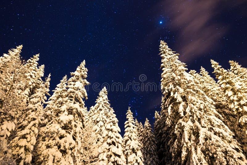 Αστέρια χιονιού στοκ φωτογραφίες