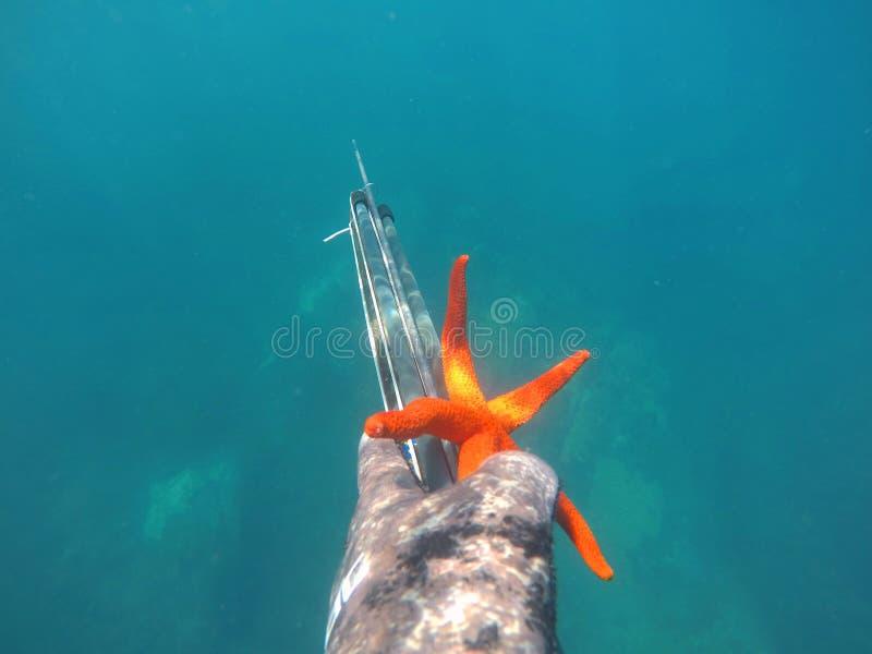 Αστέρι θάλασσας διαθέσιμο στοκ εικόνες