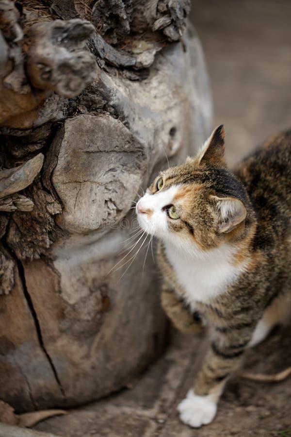 Αστεία άστεγη γκρίζα γάτα στοκ φωτογραφίες με δικαίωμα ελεύθερης χρήσης