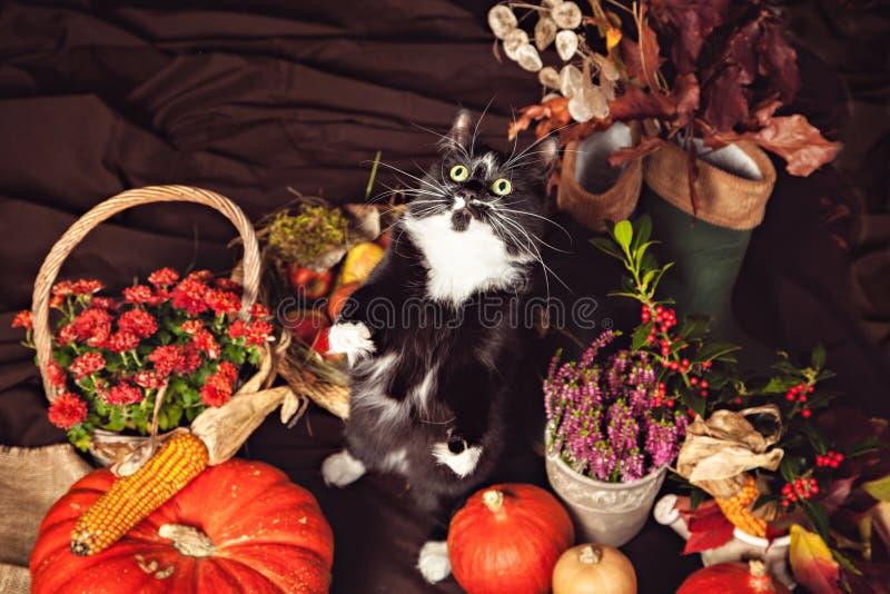 Αστεία γραπτή γάτα μεταξύ των λαχανικών φθινοπώρου στοκ εικόνες