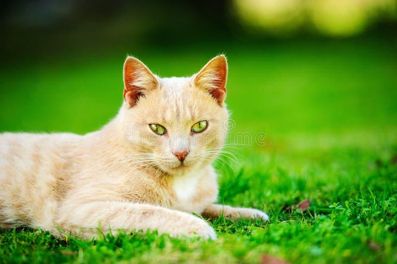 Αστεία κόκκινη γάτα στοκ εικόνες