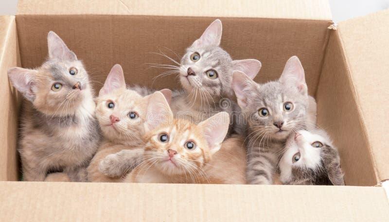 Αστεία μικρά γατάκια σε ένα κιβώτιο στοκ εικόνες με δικαίωμα ελεύθερης χρήσης