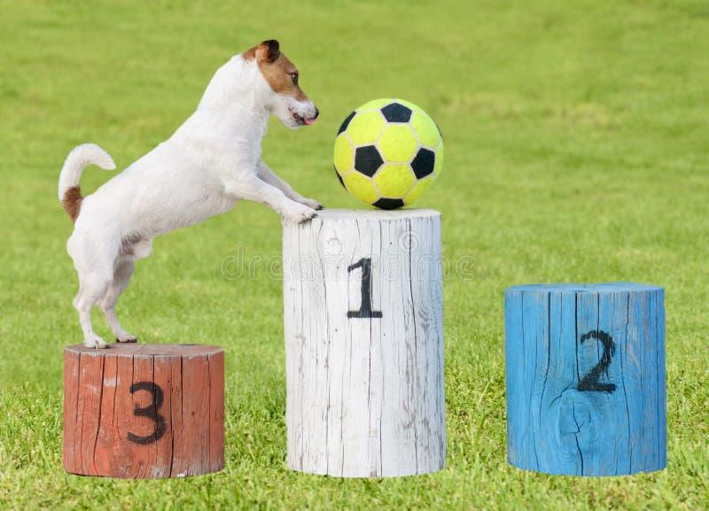 Αστεία όνειρα φορέων για τη νίκη του βραβείου ανταγωνισμού ποδοσφαίρου (υπόβαθρο χλόης) στοκ εικόνα